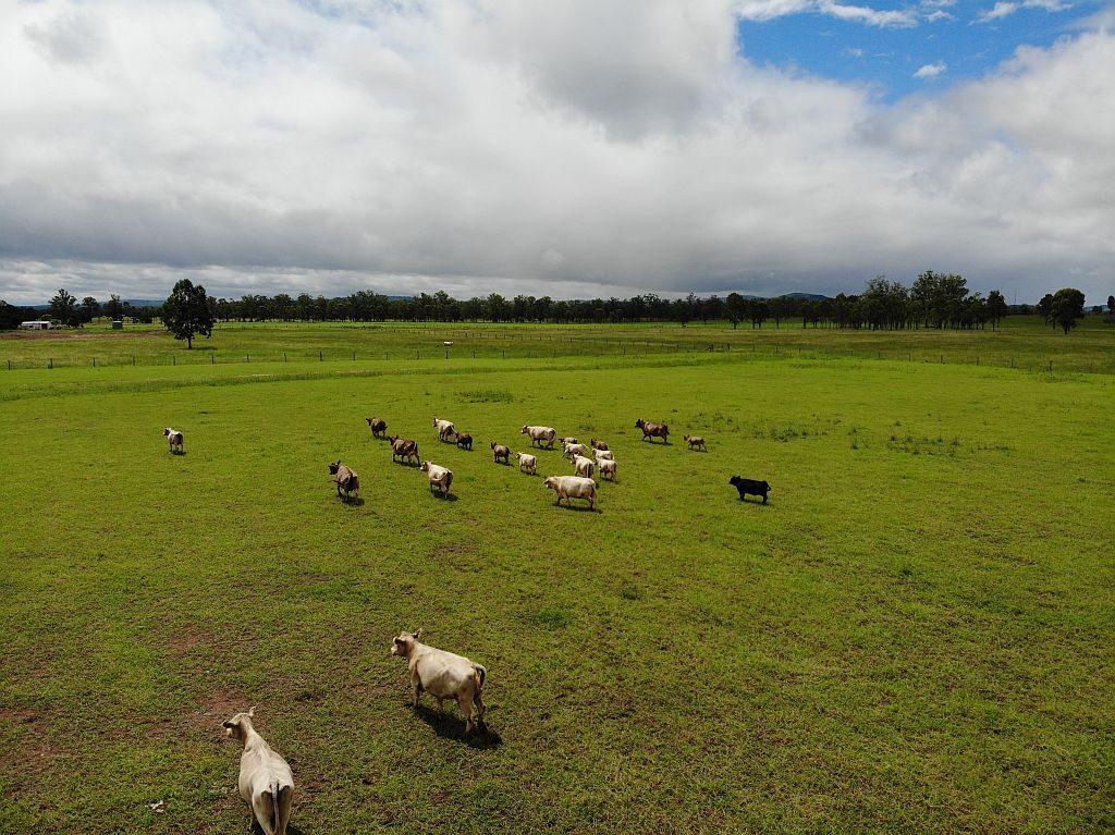 FemaleSale Herd