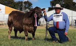 Oakvale Real Time Beef 2021 GRAND CHAMPION SQUARE MEATERS BULL